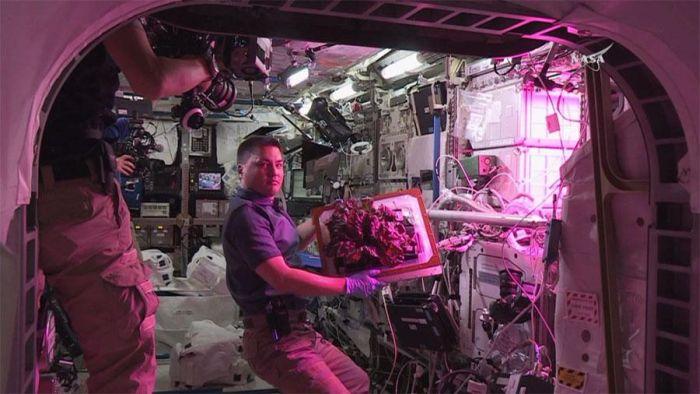 На МКС впервые вырастили овощи (7 фото + видео)
