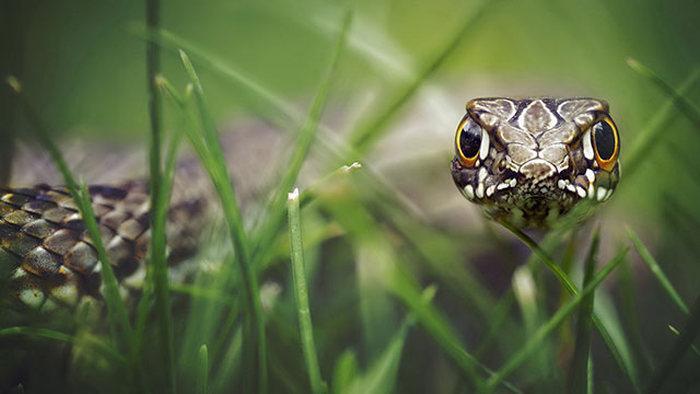 Великолепные фотографии дикой природы (33 фото)