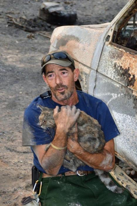 В Калифорнии кошка сумела пережить лесной пожар (4 фото)
