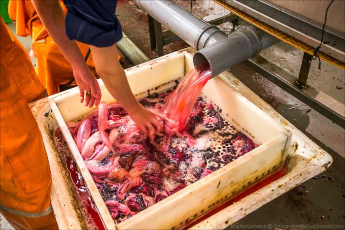 Как производят красную икру (54 фото)