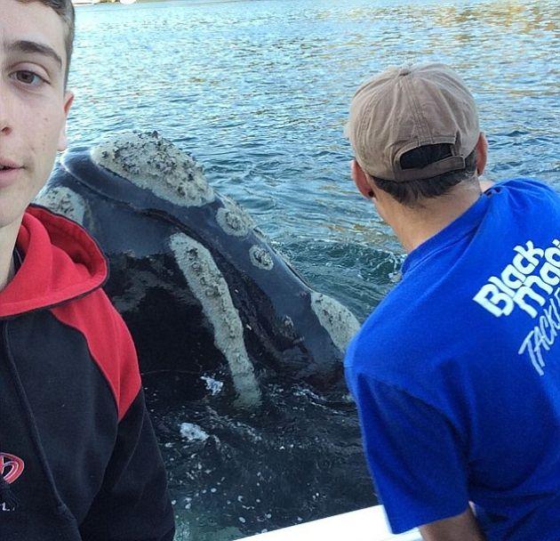 В Австралии кит попросил помощи у людей (2 фото + видео)