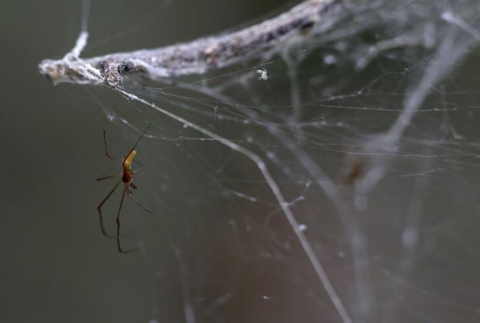 В Техасе тысяча пауков сплела гигантскую паутину (5 фото)