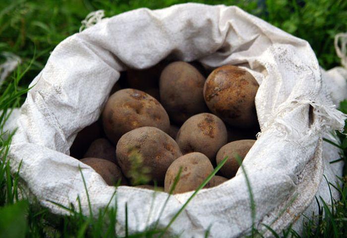 Сервис отправки сообщений на картофелинах принес своему создателю более 20 000 долларов за 2 месяца (3 фото)