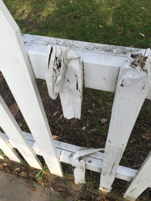 Термиты тайком уничтожили забор изнутри (3 фото)