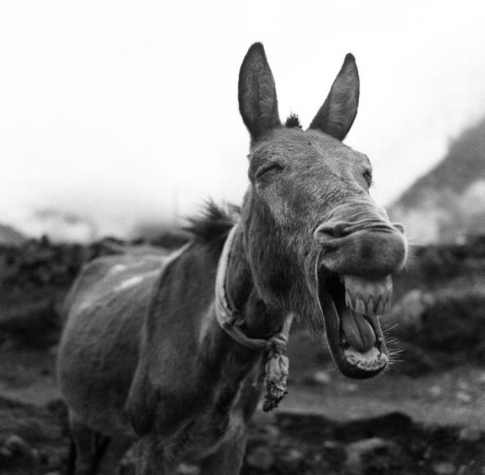 Лучшие снимки фотоконкурса National Geographic Photo Contest 2015 (26 фото)