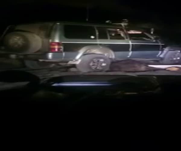 Живодеры переехали медведя автомобилем