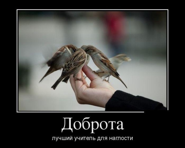 http://cdn.trinixy.ru/pics5/20150821/demotivatory_13.jpg