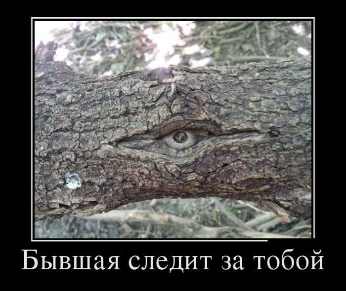 http://cdn.trinixy.ru/pics5/20150821/demotivatory_21.jpg