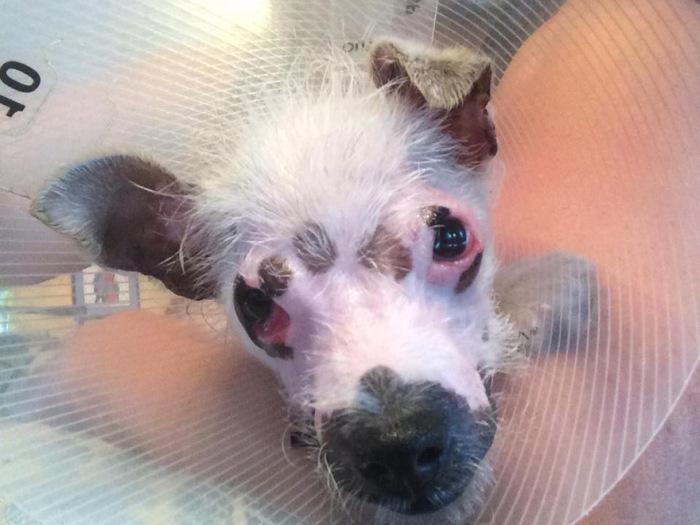 Американская семья взяла собаку из приюта, несмотря на ее недуг (7 фото)