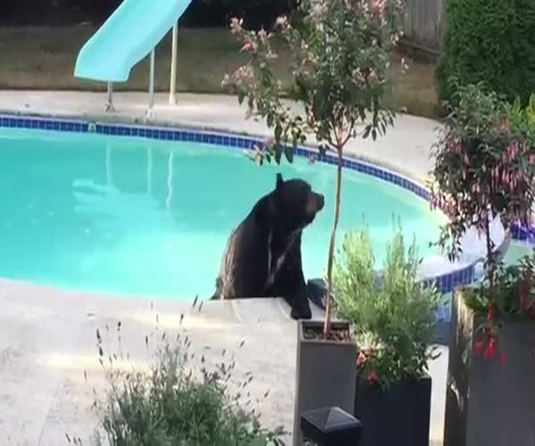 Медведь решил искупаться в бассейне