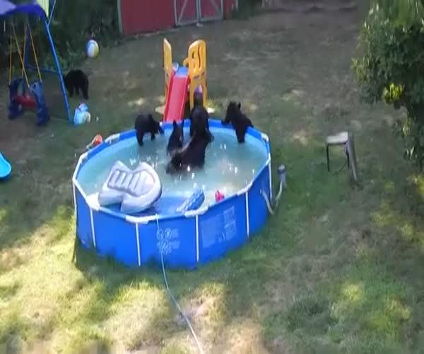 Семья медведей принимает водные процедуры