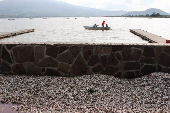 Экологическая трагедия в мексиканском озере Кахититлан (19 фото)