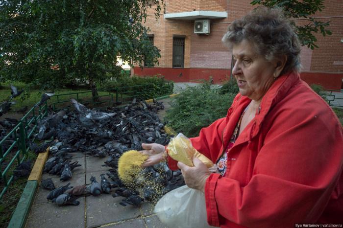 Голуби в одном из дворов Москвы (12 фото)