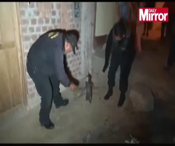 Полицейские устроили погоню за пингвином