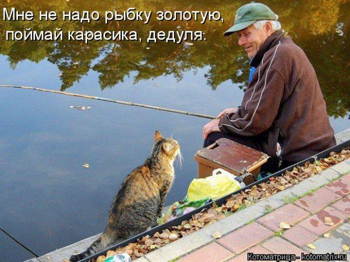 кот идет на рыбалку
