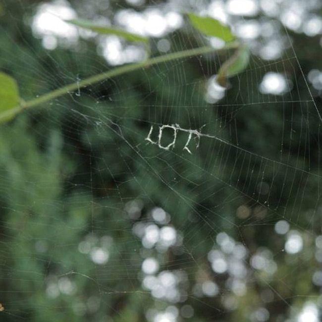 Паук с помощью паутины написал «LOL» (2 фото)