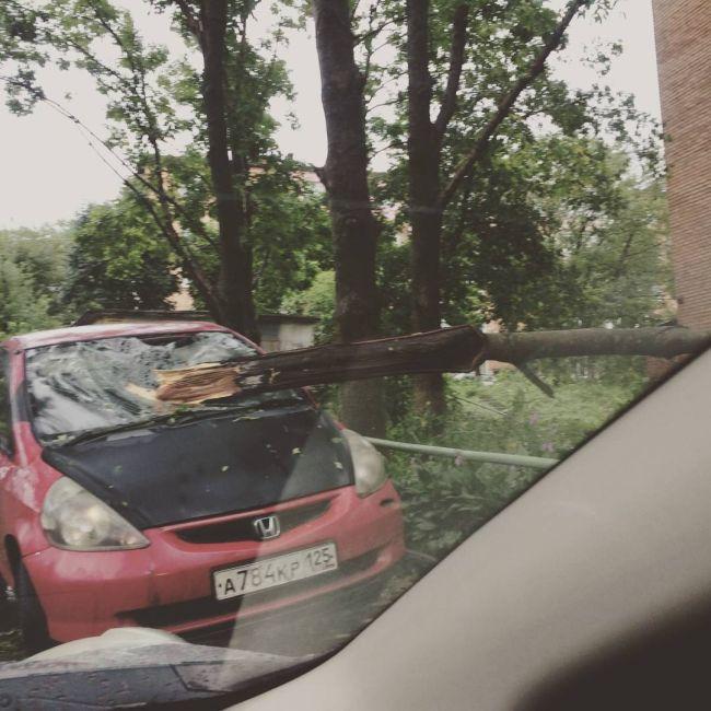 Приморский край ликвидирует последствия тайфуна «Гони» (16 фото + видео)