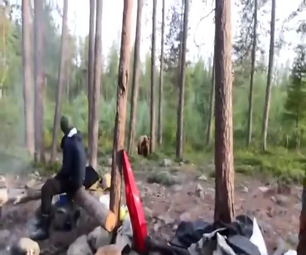 Туристы повстречались с медведем