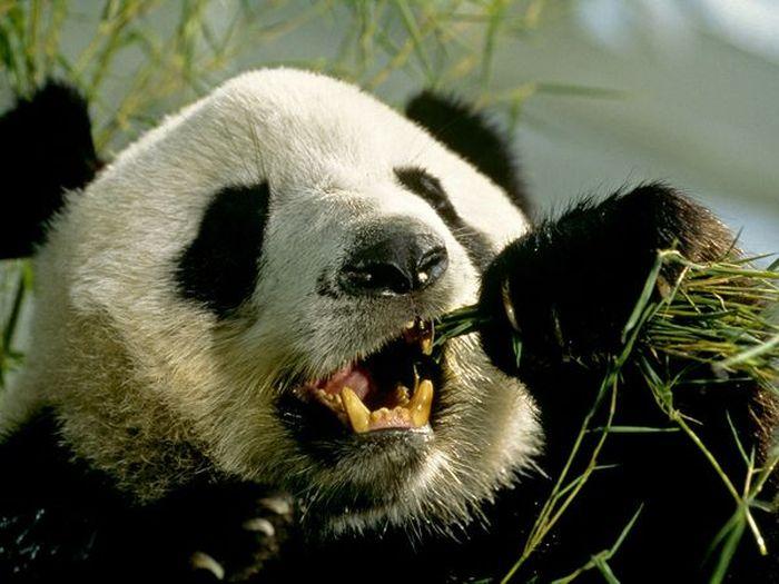 Любопытные и странные факты о Китае и китайцах (20 фото)