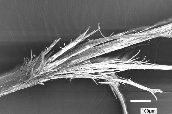 Части нашего организма под микроскопом (18 фото)