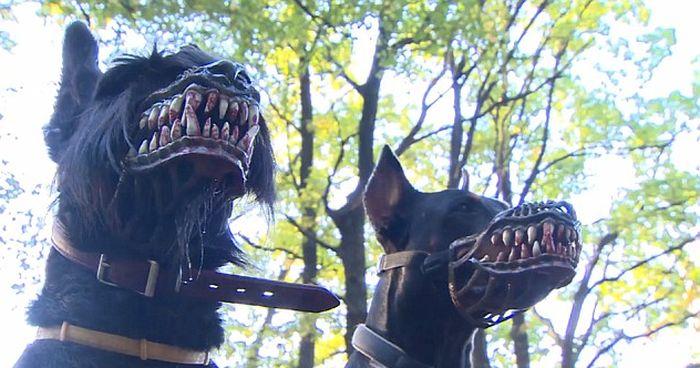 Этот намордник превратит даже самую милую собаку в свирепого монстра (4 фото + видео)