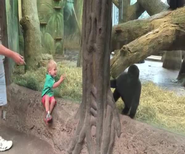 Горилла играет в прятки с мальчиком