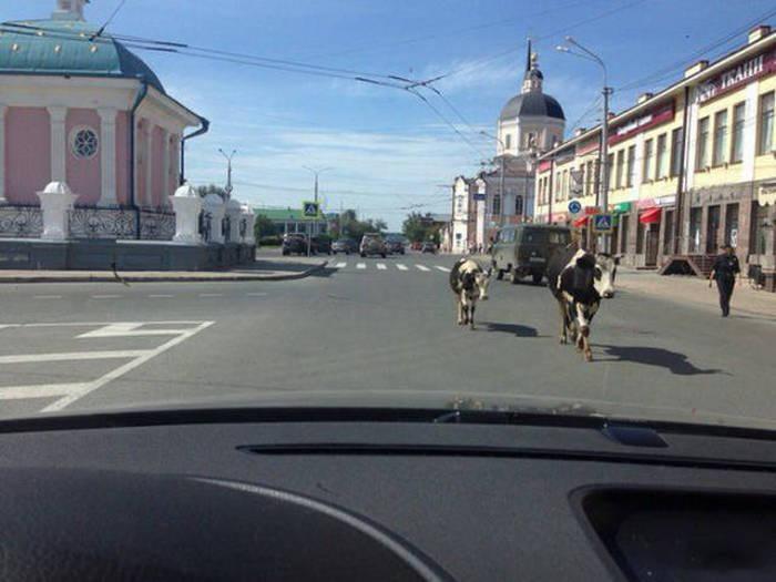 Фото, которые возможно было сделать только в России. Часть 12 (39 фото)