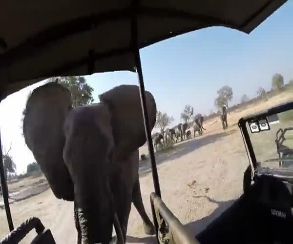 Агрессивный слон напал на автомобиль