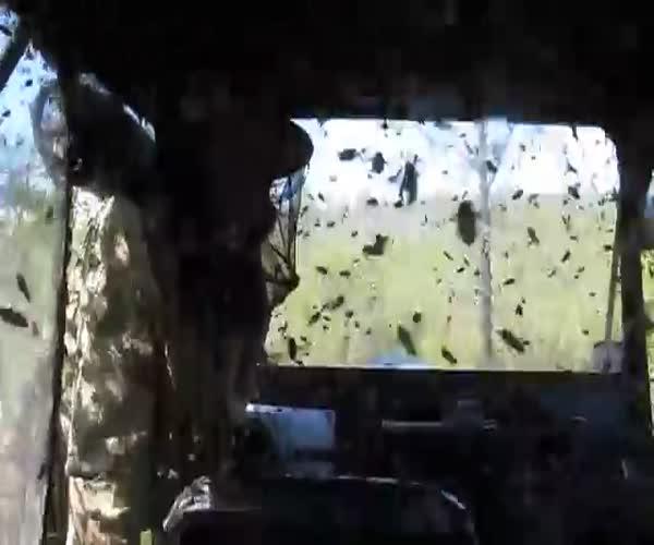 Бесчисленное количество насекомых заполонило транспортное средство