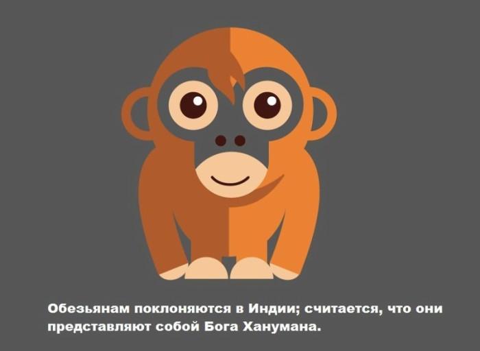 Малоизвестные факты о животных (13 картинок)