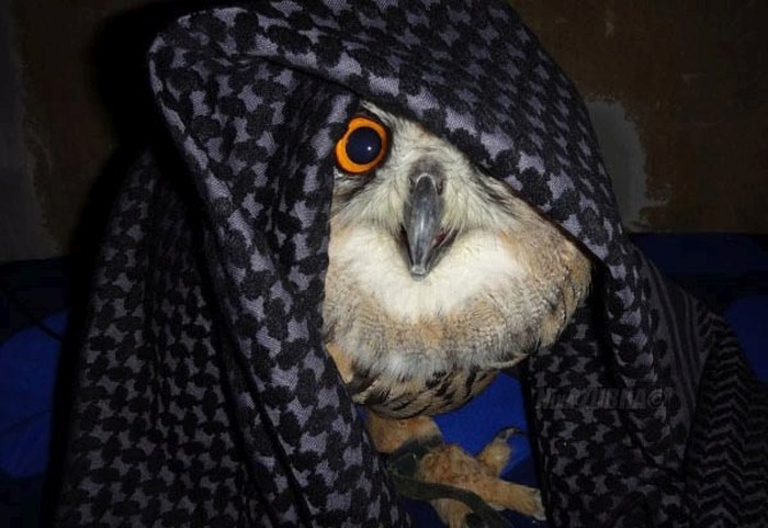 Забавная сова (6 фото)