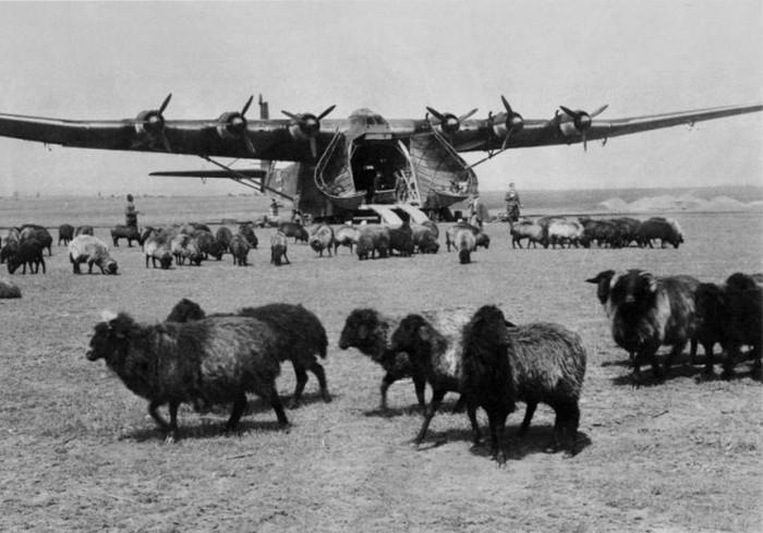 Документальные фото Второй мировой войны (75 фото)