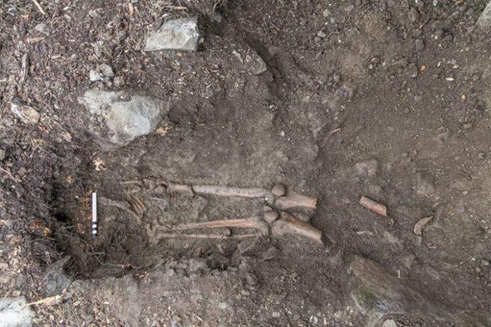 В Ирландии под поваленным деревом обнаружили древнюю могилу (2 фото)