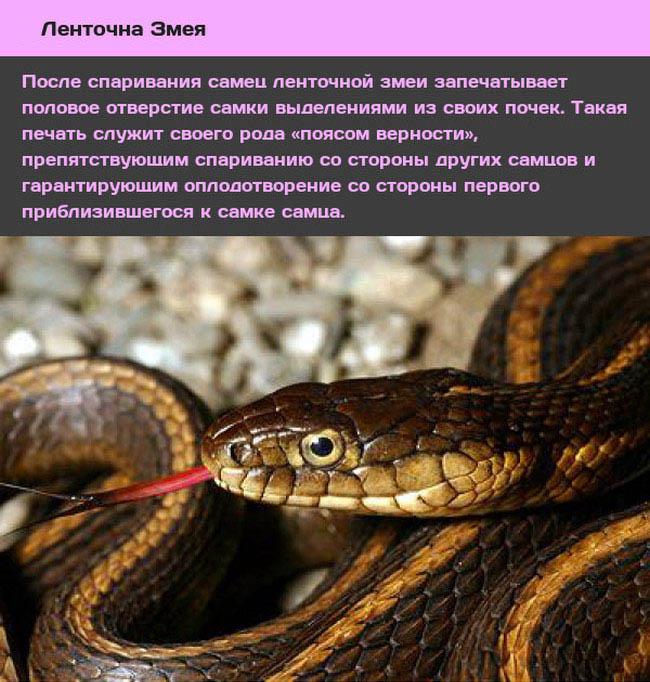 10 самых странных видов размноженияя в животном мире