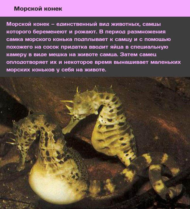 ТОП-10 животных со странным сексуальным поведением (10 фото)