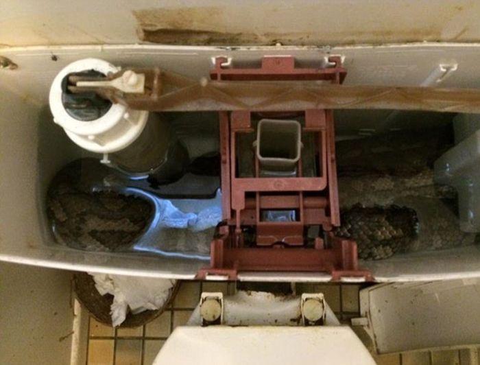 Обычное зрелище в австралийском туалете (4 фото)