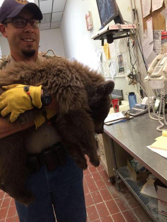 Медвежонок проник в пиццерию и уснул прямо на кухне (4 фото)