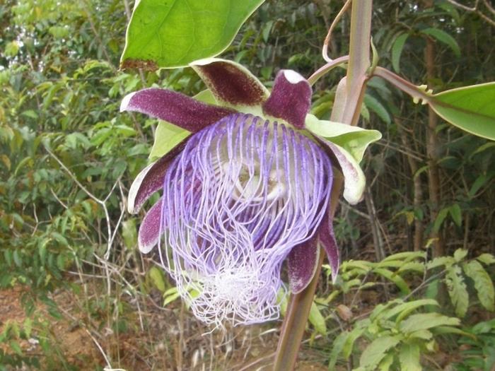 В джунглях Амазонки обнаружили новые виды флоры и фауны (10 фото)