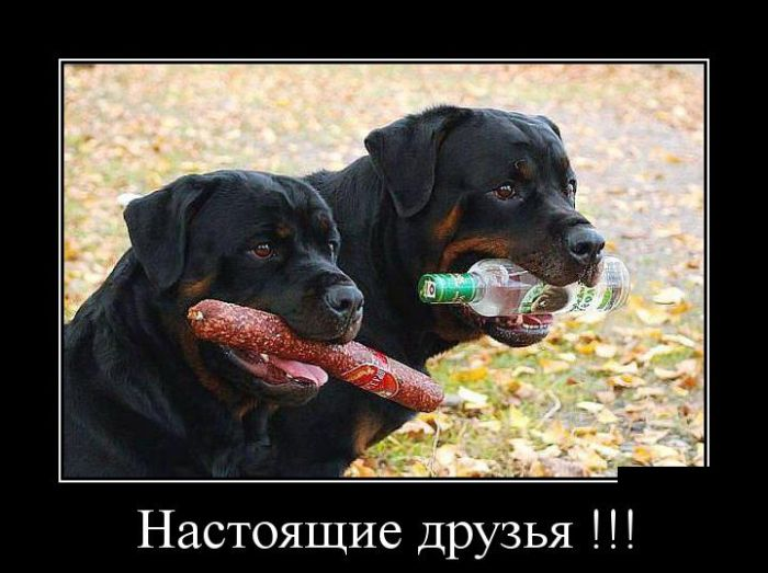 http://trinixy.ru/pics5/20150917/demotivatory_18.jpg