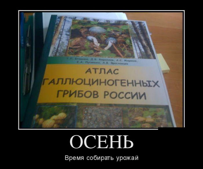 http://trinixy.ru/pics5/20150917/demotivatory_30.jpg