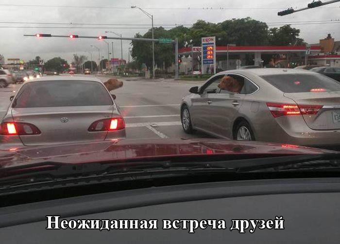 http://trinixy.ru/pics5/20150917/podborka_47.jpg