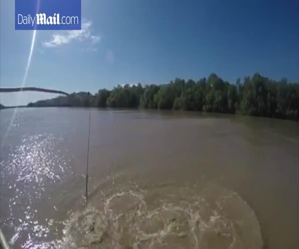 Крокодил поднялся из воды на хвосте