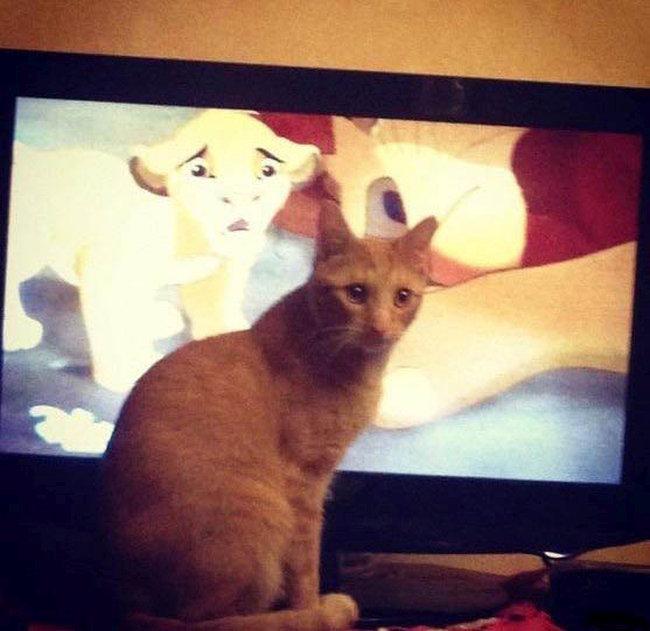 Расстроенный кот (3 фото)