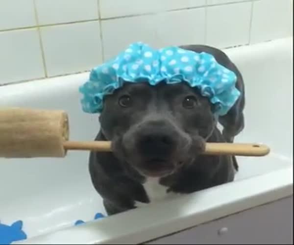 Пес принимает душ