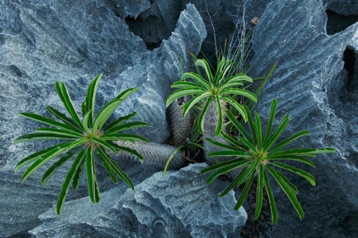 «Каменный лес» в национальном парке Цинги-де-Бемараха на Мадагаскаре (9 фото)