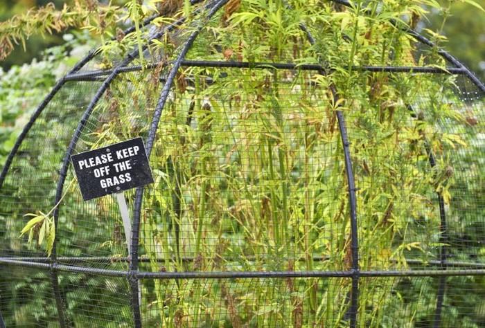 Виртуальная экскурсия по ядовитому саду Альнвика (4 фото)