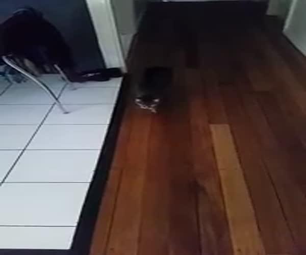 Кот-вредитель
