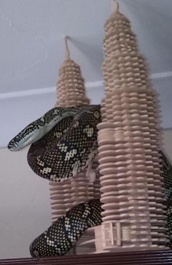 Незваный гость в доме австралийца (2 фото)