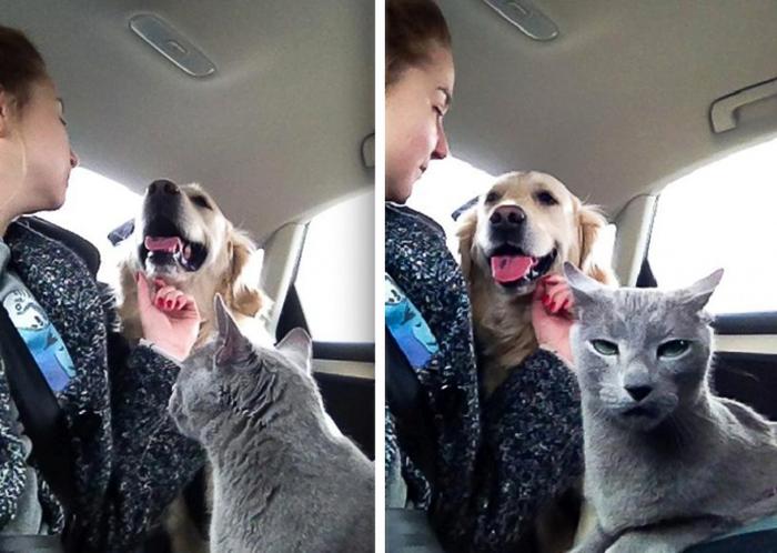 Забавные коты, которые ведут себя совсем, как офисные работники (15 фото)