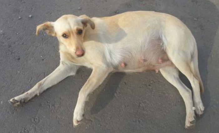 В Воронеже спасли замурованную собаку (4 фото + видео)